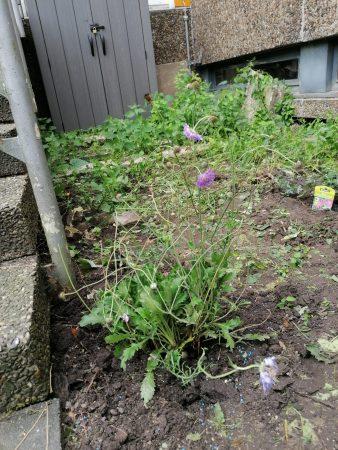 Saisoneröffnung der Garten-AG